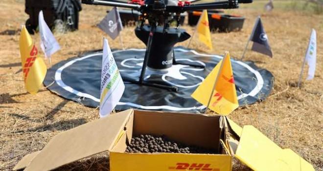 DHL Express Türkiye'nin hedefi yıl sonuna kadar en az 50.000 ağaç tohumunu filizlendirmek