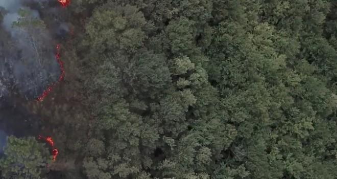 Kiğılı, 5 bin ağaçlık 'Kiğılı Ormanı'nı doğaya kazandıracak